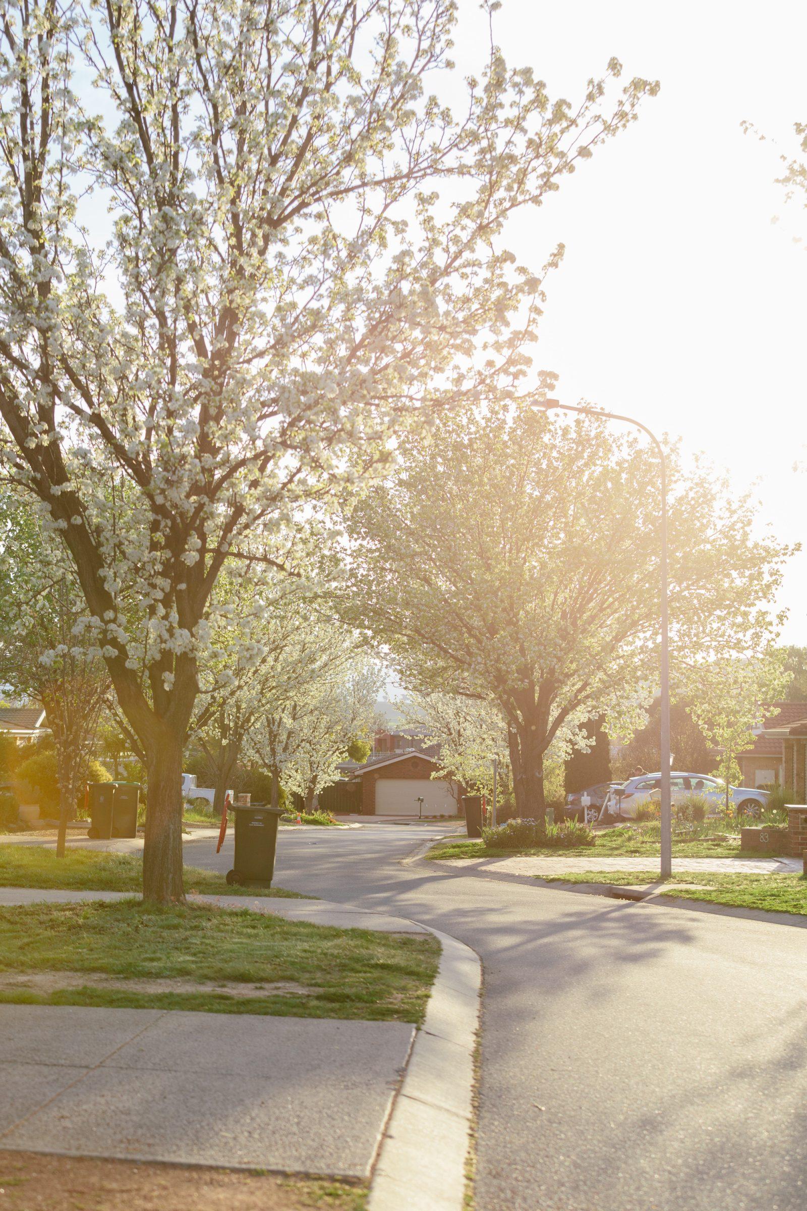 Suburbia's time in the sun: Bernard Salt